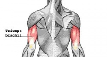 3 تمرین با دمبل جهت تقویت عضلات پشت بازو و کتف